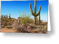 Tonto National Forest Cactus Greeting Card