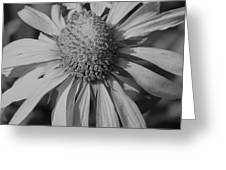 Too Wide Bw Greeting Card
