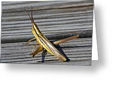 Toothpick Grasshopper Greeting Card