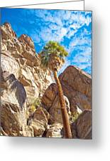 Top Of A Palm Near Top Of Andreas Canyon-ca Greeting Card