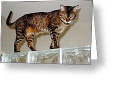 Tora On Glass II Greeting Card