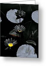 Torchlight Water Flowers Greeting Card