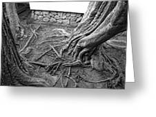 Tormented Trees Of Japan Greeting Card
