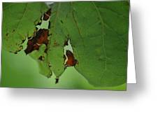 Torn Leaf Abstract Greeting Card