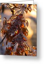 Toronto Ice Storm 2013 - Oak Leaves Jewelry Greeting Card
