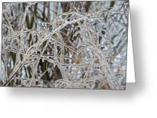 Toronto Ice Storm 2013 - Pale Frozen Grasses  Greeting Card