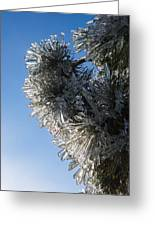 Toronto Ice Storm 2013 - Pine Needle Flowers In The Sky Greeting Card