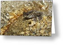 Torrent Treefrog Aka Waterfall Frog Greeting Card