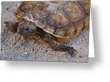 Tortoise By Nature Greeting Card