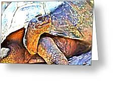 Tortoise Gouache Greeting Card