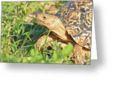 Tortoise Greens Greeting Card
