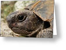 Tortoise Portrait In Macro Greeting Card