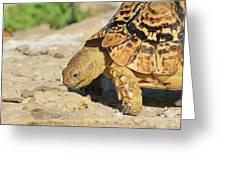 Tortoise Pose Greeting Card