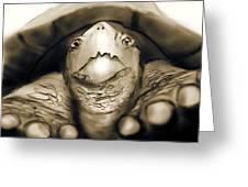 Tortuga Greeting Card