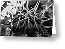Total Eclipse Of The Sunflower - Bw Greeting Card