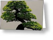 Touch Of Bonsai Greeting Card