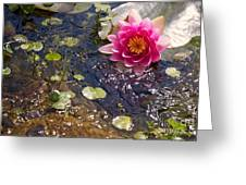 Touch Of Pink Greeting Card