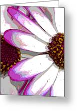 Touch Of Pink Osteospermum Trio B Greeting Card