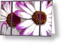 Touch Of Pink Osteospermum Trio Sample Greeting Card