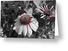 Touch Of Red Invite Greeting Card