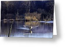 Touchdown Trumpeter Swan Greeting Card