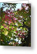 Touches Of Autumn  Greeting Card