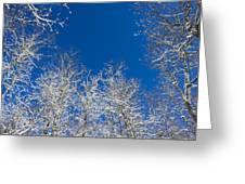 Touching The Winter Sky Greeting Card