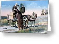 Tourist Feeding Bear Yellowstone Np Greeting Card