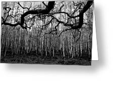 Towards The Silver Birches Greeting Card