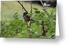 Towhee Keeps Watch On High Greeting Card by Kym Backland