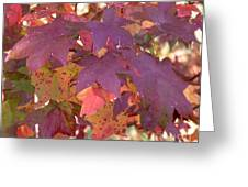 Traces Of Fall Greeting Card