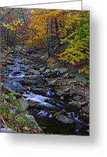 Tracking Color - Big Hunting Creek Catoctin Mountain Park Maryland Autumn Afternoon Greeting Card