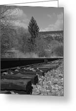 Tracks And Trees Greeting Card