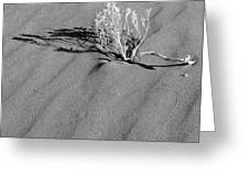 Tracks In The Sand - Mono Greeting Card