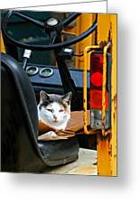Tractor Cat Greeting Card