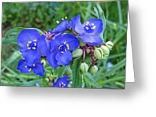Tradescantia Blooming Greeting Card