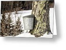 Traditional Sap Bucket On Maple Tree In Vermont Greeting Card