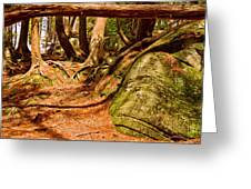 Trail In A Forest, Muskoka, Ontario Greeting Card