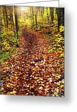 Trail In Fall Forest Greeting Card