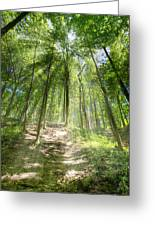 Trail In The Forest Greeting Card