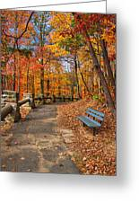 Trail Of Gold Greeting Card