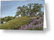 Trail Of Lupine Greeting Card