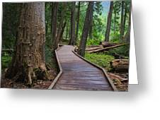 Trail Of The Cedars Greeting Card