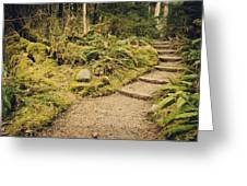Trail Through The Moss Greeting Card