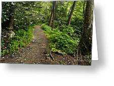 Trail To Chimney Tops - D005669a Greeting Card