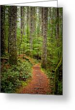 trail to Lower Lewis Falls Greeting Card
