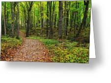 Trail To Miners Falls Greeting Card