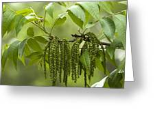 Trailing Green Draperies Greeting Card