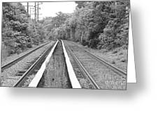 Train Tracks Running Through The Forest Greeting Card