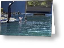 Trainer And The Tails Of A Duo Of Dolphins At The Underwater World Greeting Card